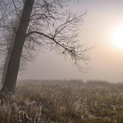 Крихка ніжність зимового Сонця