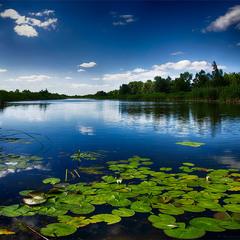 Полдень июня на речке Ольшанка