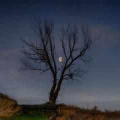 В ветвях запуталась Луна...
