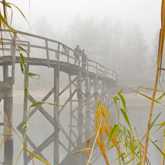 Fog bait