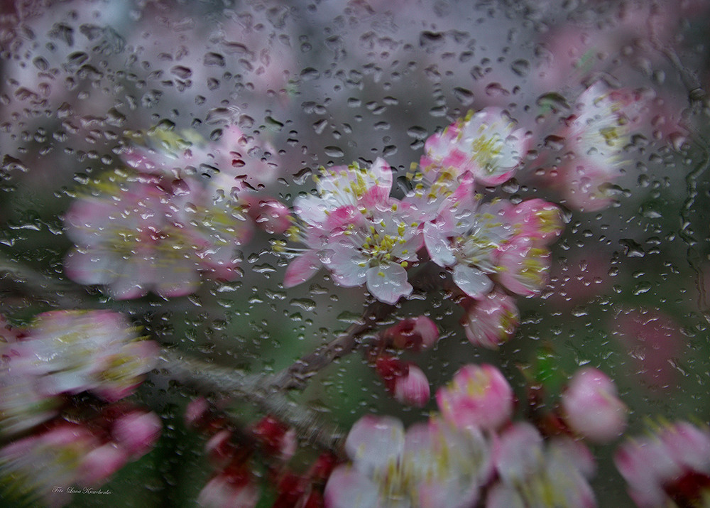 ваше фото дождя весной вес роспись