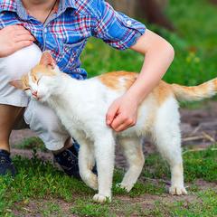 Дарите нежность, даже если вы - кот)