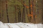 відлига в лісі