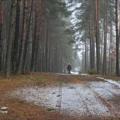відлига в лісі  - 2