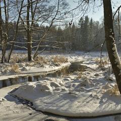 зимовий ліс (2) - 2016