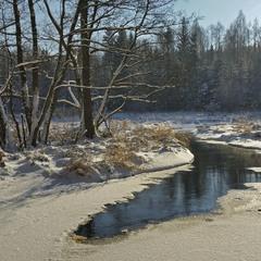 зимовий ліс - 2016