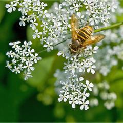 насекомые - 2