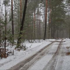 відлига в лісі - III
