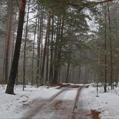 відлига в лісі - IV