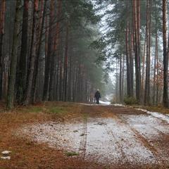відлига в лісі - II
