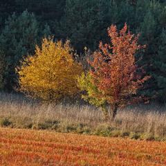 осінні кольори