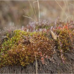 листопадова природа