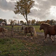 осінь в селі