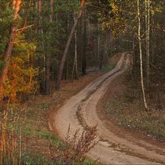 дорога в ліс