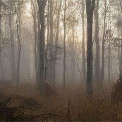 в туманi