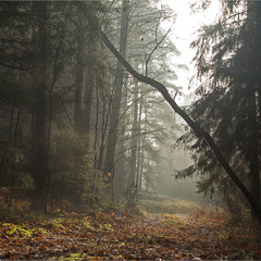 ліс в тумані - II