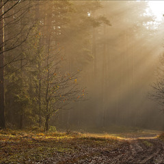 ліс в тумані