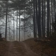грудень в нашому лісі - VII