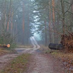 грудень в нашому лісі - V