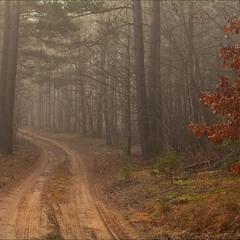 грудень в нашому лісі - IV