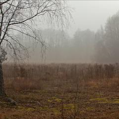грудень в нашому лісі