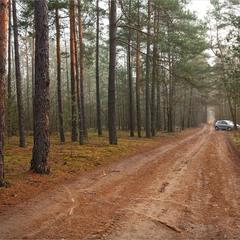грудень в нашому лісі - VI
