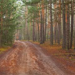 грудень в нашому лісі - III