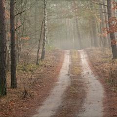 у сосновому лісi