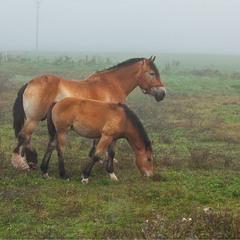 коні в тумані