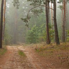 осінь прийшла в ліс