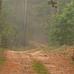 осінь прийшла в ліс - III