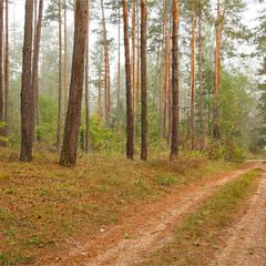 осінь прийшла в ліс - II