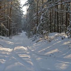 січневий день в лісі