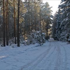 короткий січневий день в лісі