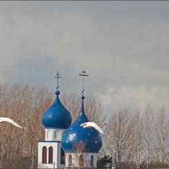 лебеди и купола