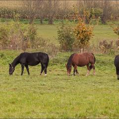 коні  на пасовищі