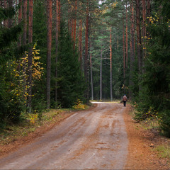 восени в лісі