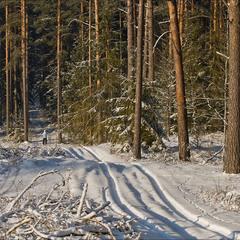 зима в лісі - 2017
