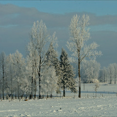зима 2009 - V