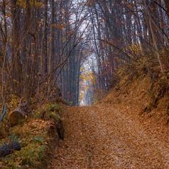 Дороги осінніх лісів.