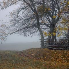 Осінь в туманах.