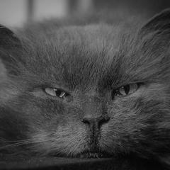 Кіт Чеширський:)