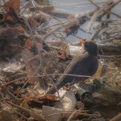 Клопіт весняного птаха.