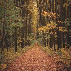 Шляхи - дороги з року в рік ведуть собою покоління...