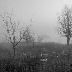 Стояв туман осінній.