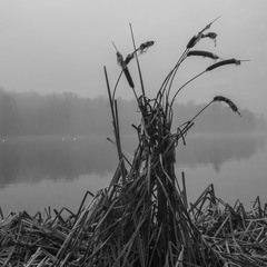 Дух озера.