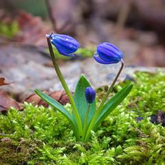 Весна то любов...