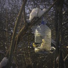 Лютий випробовує птахів та людей: перших на витривалість, других на людяність.