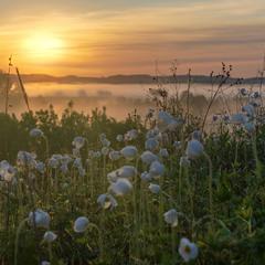 Ранок та квіти.