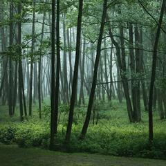У дощовому лісі.